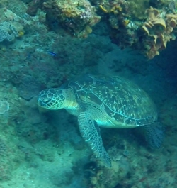 This little guy was hanging out under a rock as I swam over.