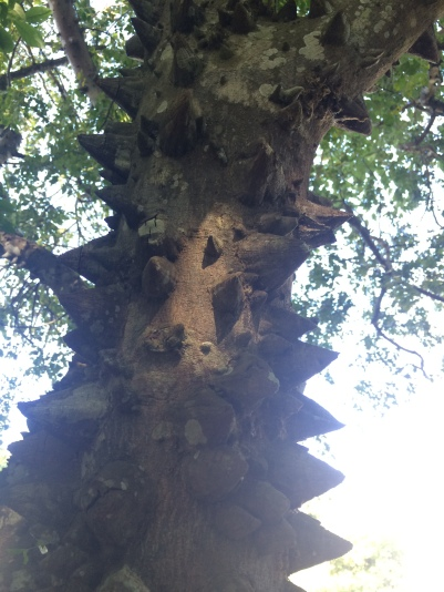 Tree with spikes