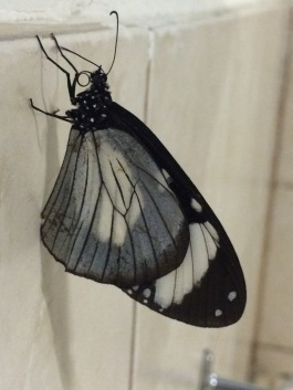 Check out the nose on this butterfly!